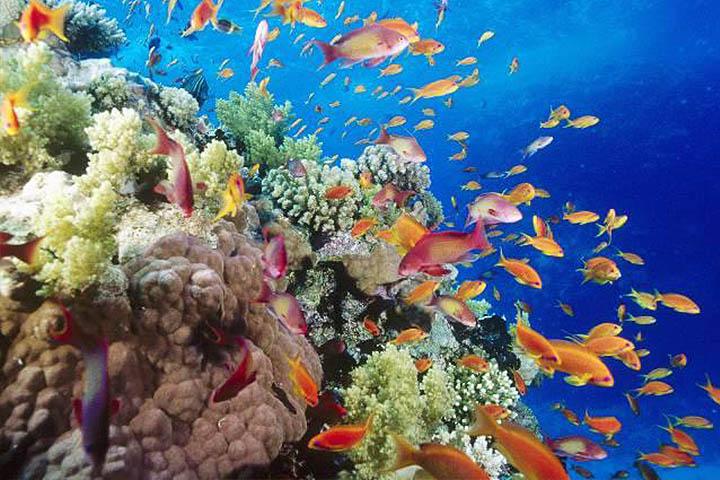 A Vörös-tenger természetes zátonya 1100 halfaj otthona.