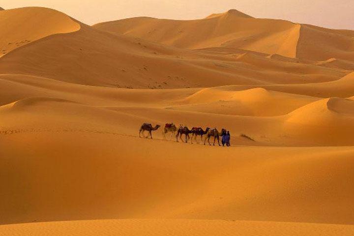 A Szahara forró sivataga a szélsőségeket is jól tűrő élővilágot rejt.