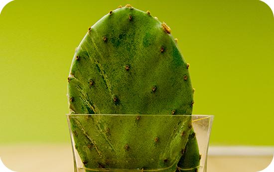 fügekaktusz kaktusz fogyás